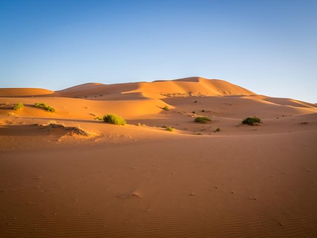 Sahara woestijn onder het zonlicht en een blauwe hemel in marokko in afrika Gratis Foto