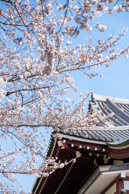 Sakura boom bij tempel in japan Gratis Foto
