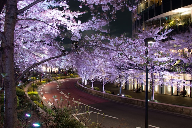 Sakura verlichten in mori tuin van roppongi heuvels Premium Foto