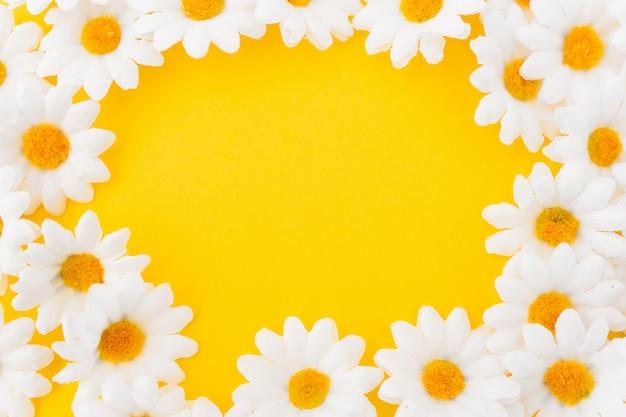 Samenstelling in cirkel van madeliefjes op gele achtergrond Gratis Foto