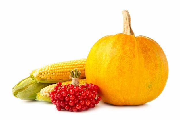 Samenstelling van de herfst met herfst pompoen, maïs en viburnum geïsoleerd op wit. bovenaanzicht Premium Foto