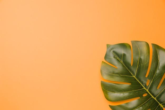 Samenstelling van groene monstera plant blad Gratis Foto