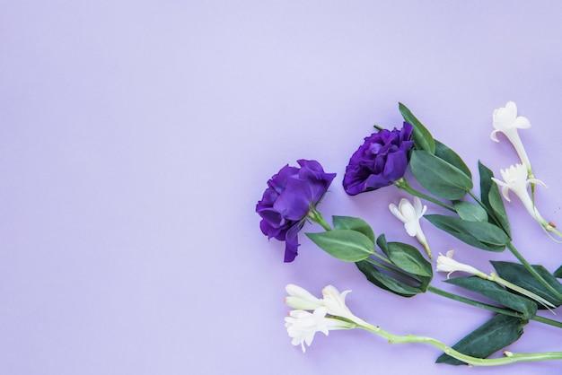 Samenstelling van witte en blauwe bloemen Gratis Foto