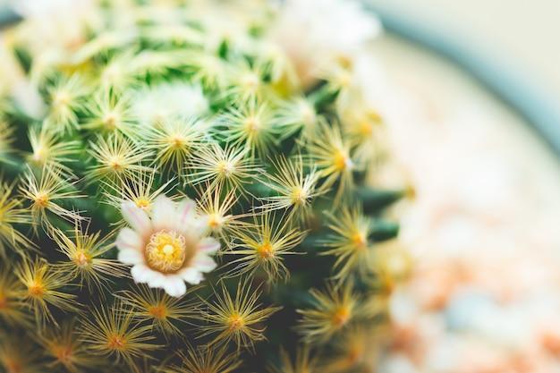 Sappige baby cactus close-up doornen Premium Foto