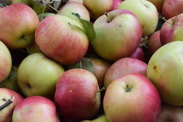 Sappige heerlijke appels in de doos. herfst oogst. Premium Foto