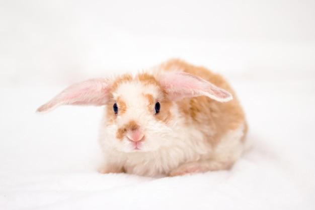 Schattig klein konijntje met grote oren Premium Foto