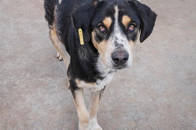 Schattige hond in een opvangcentrum te wachten om door iemand te worden geadopteerd Gratis Foto