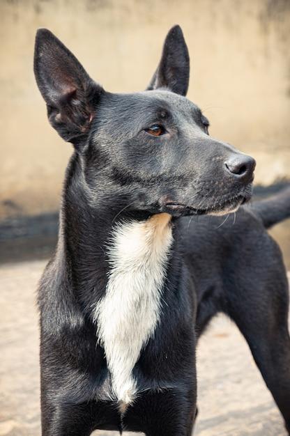 Schattige hond met zijn oren omhoog in bogotá colombia Gratis Foto