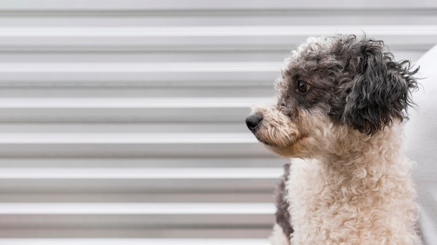 Schattige hond poseren buitenshuis Gratis Foto
