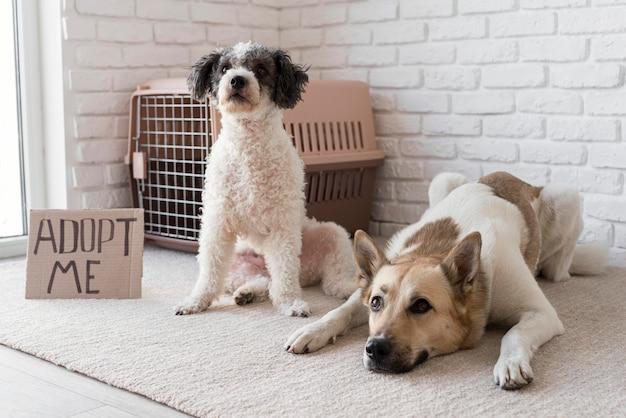 Schattige honden in de buurt adopteren me banner Gratis Foto