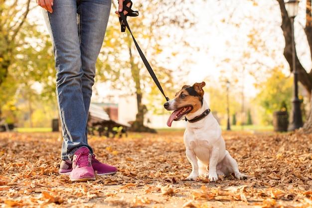 Schattige kleine hond buiten met eigenaar Gratis Foto