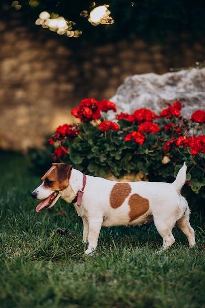 Schattige kleine hond in de achtertuin Gratis Foto