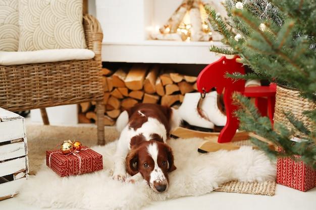 Schattige kleine hond op een kerst versierde woonkamer Gratis Foto