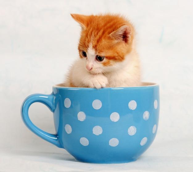 Schattige kleine kitten in een blauwe beker Premium Foto