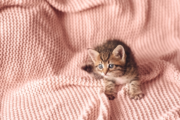 Schattige kleine rode kitten slaapt op bont witte deken Premium Foto