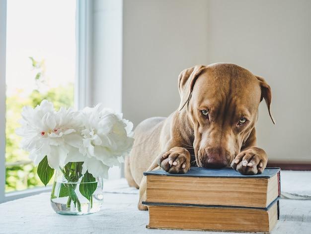 Schattige puppy en vintage boeken. studio foto Premium Foto