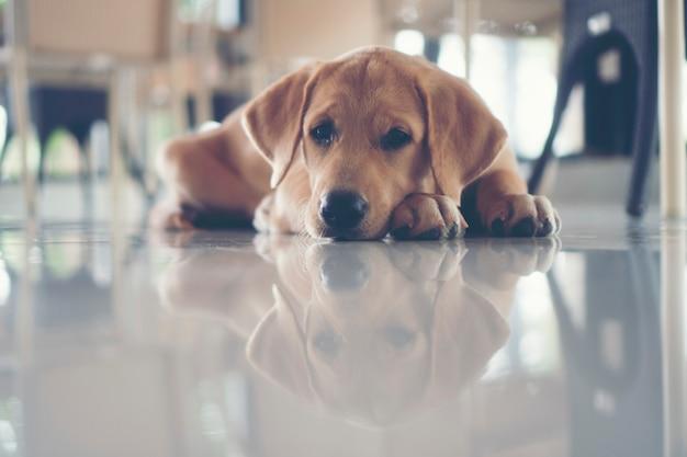Schattige puppy's hond zijn slaperig. Premium Foto