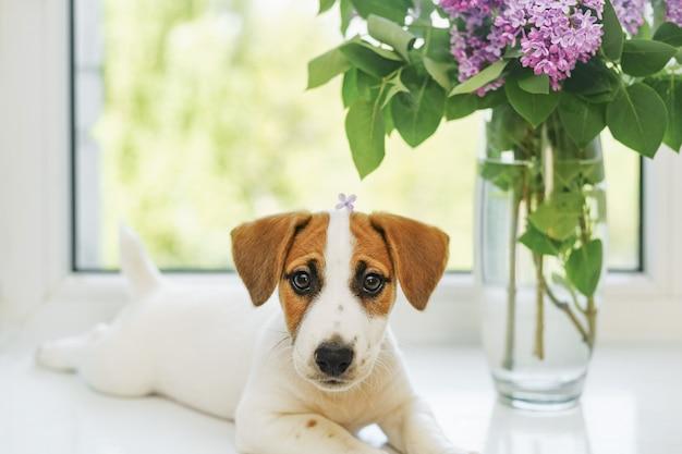 Schattige puppy zit op het venster Premium Foto