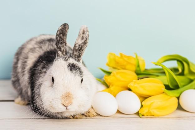 Schattige zwart-wit bunny naast paaseieren en gele verse tulpen op een houten tafel met blauwe achtergrond Premium Foto