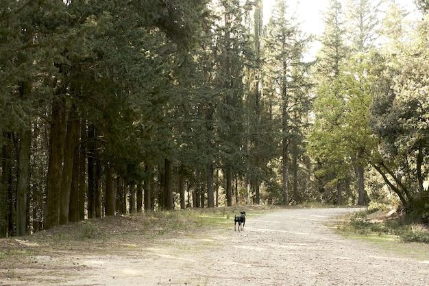 Schattige zwarte hond wandelen in een bos met veel groene bomen Gratis Foto