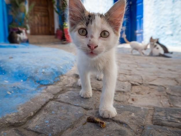 Schattige zwerfkat wandelen in de straten van rabat, marokko Gratis Foto