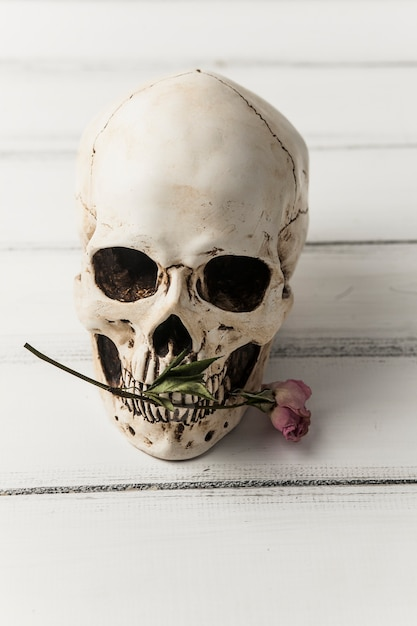 Schedel met roze bloem Gratis Foto