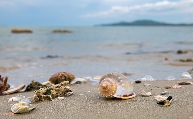 Schelpen op het strand met zee en lucht. Premium Foto