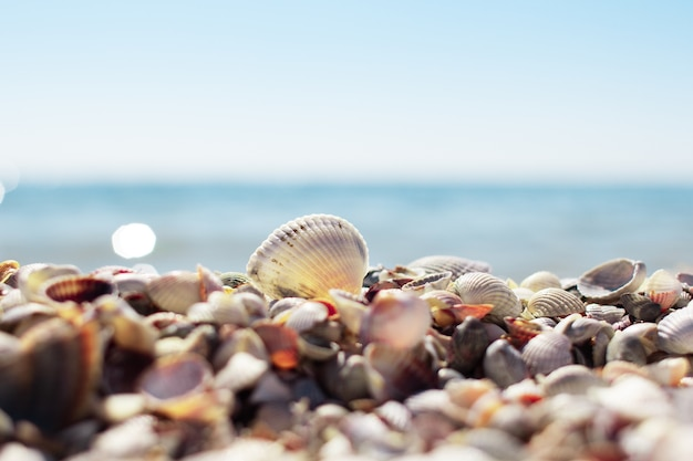 Schelpen op het strand Premium Foto