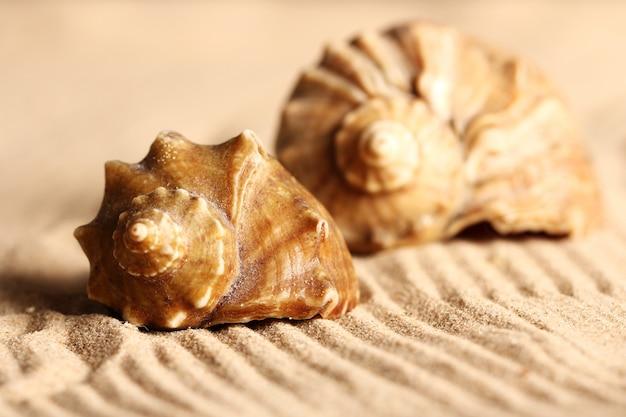 Schelpen op het zand Gratis Foto