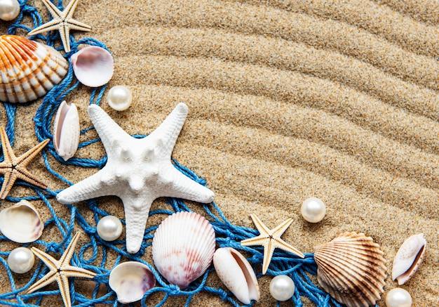 Schelpen op zand. zee zomervakantie oppervlak met ruimte voor de tekst. bovenaanzicht Premium Foto