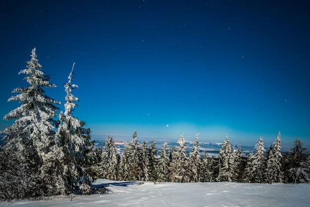 Schilderachtig landschap van hoge slanke spar Premium Foto