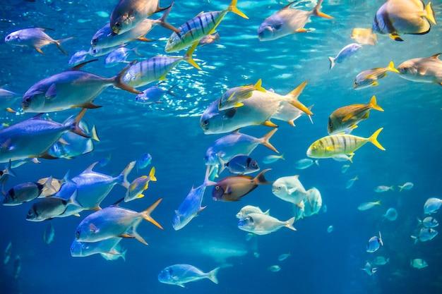 School van zeevis zwemmen naar wateroppervlak Premium Foto