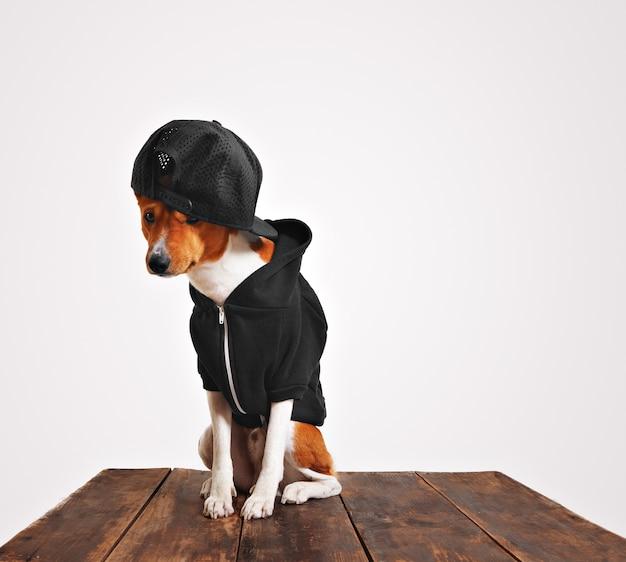Schuldig uitziende bruine en witte hond in coole zwarte hoodie en truckercap met gaasrug op een rustieke houten tafel Gratis Foto