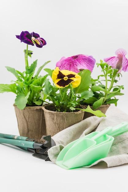 Scoop meten; tuin gereedschap; servet en turf pot met viooltje en petunia planten tegen een witte achtergrond Gratis Foto