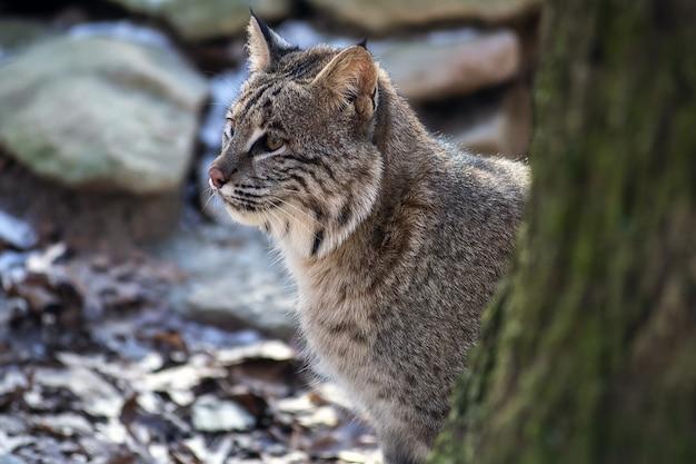 Selectieve aandacht die van een wilde kattenzitting is ontsproten Gratis Foto