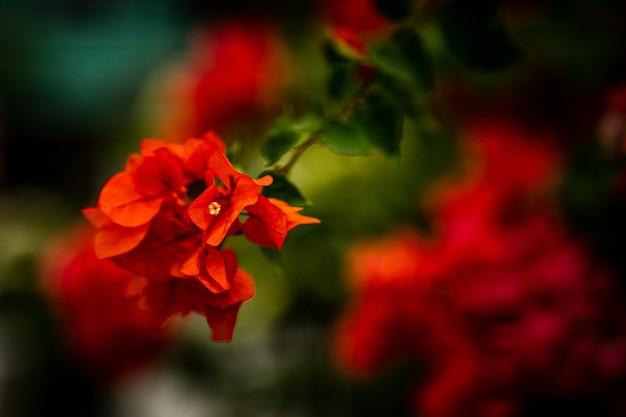 Selectieve aandacht shot van een bos rode bloemen Gratis Foto