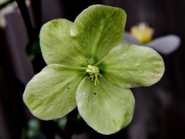 Selectieve aandacht shot van een kleine groene bloem met een onscherpe achtergrond Gratis Foto