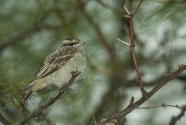 Selectieve aandacht shot van een kleine mus zittend op de tak van een boom Gratis Foto