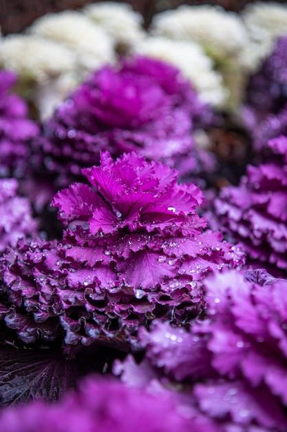 Selectieve aandacht shot van een paarse plant met druppels water Gratis Foto