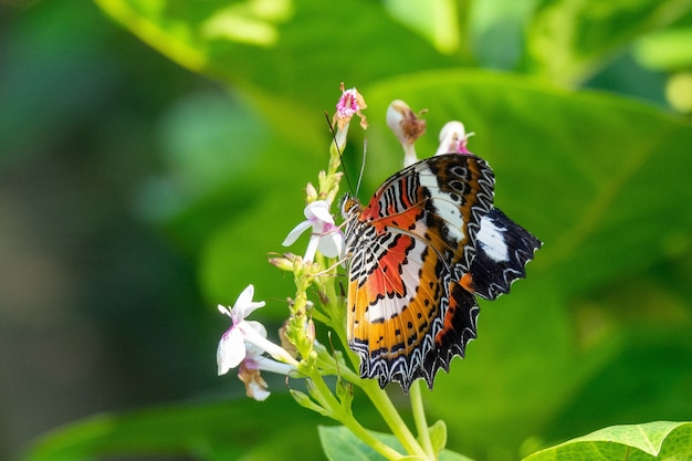 Selectieve aandacht shot van een prachtige vlinder zittend op een tak met kleine bloemen Gratis Foto