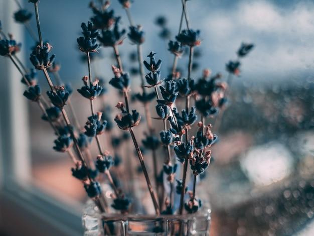 Selectieve close-up die van blauwe lavendelbloemen is ontsproten op de achtergrond van waterdruppeltjes Gratis Foto