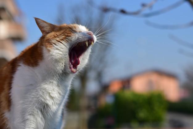 Selectieve focus close-up shot van een binnenlandse kortharige kat geeuwen in een park Gratis Foto