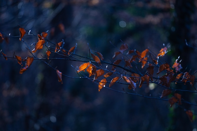 Selectieve focus shot van bruine bladeren op een boomtak in maksimir park in zagreb, kroatië Gratis Foto