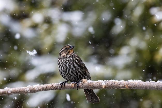 Selectieve focus shot van een exotische vogel op de dunne tak van een boom onder de sneeuw Gratis Foto