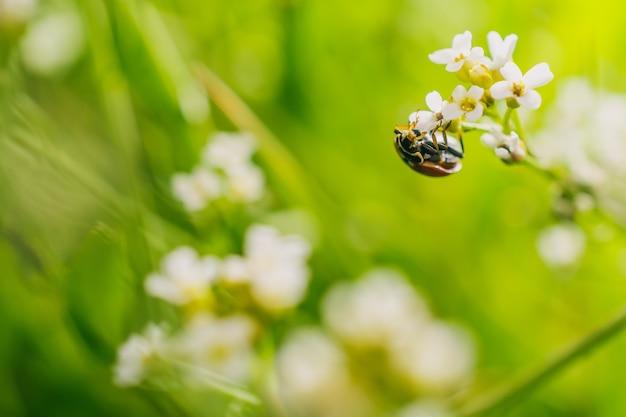 Selectieve focus shot van een lieveheersbeestje kever op een bloem in een veld vastgelegd op een zonnige dag Gratis Foto