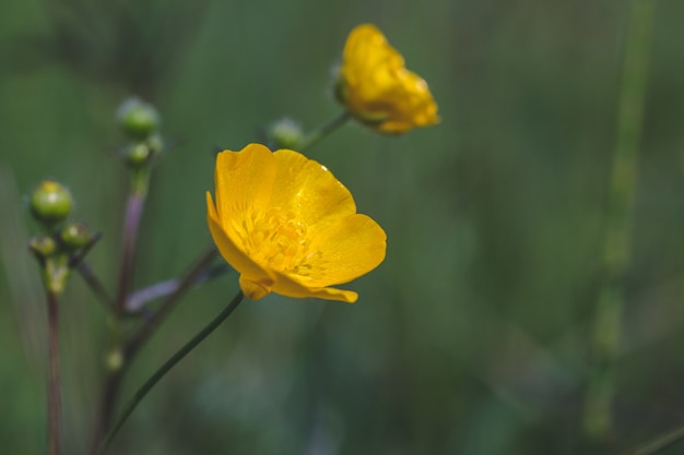 Selectieve focus shot van een mooie gele bloem in een veld vastgelegd op een zonnige dag Gratis Foto