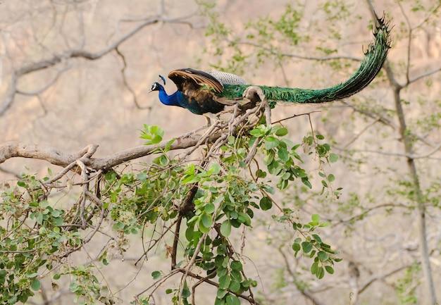 Selectieve focus shot van een prachtige pauw met een gesloten groene staart zittend op de tak van een boom Gratis Foto