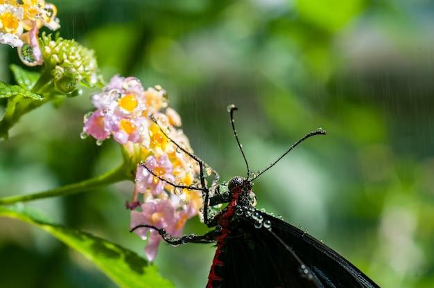 Selectieve focus shot van een zwarte nachtvlinder op roze petaled bloemen met onscherpe achtergrond Gratis Foto