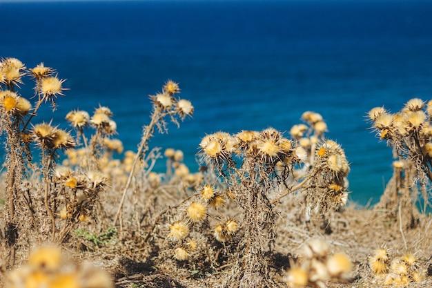 Selectieve focus shot van gele droge planten met spikes naast een strand Gratis Foto