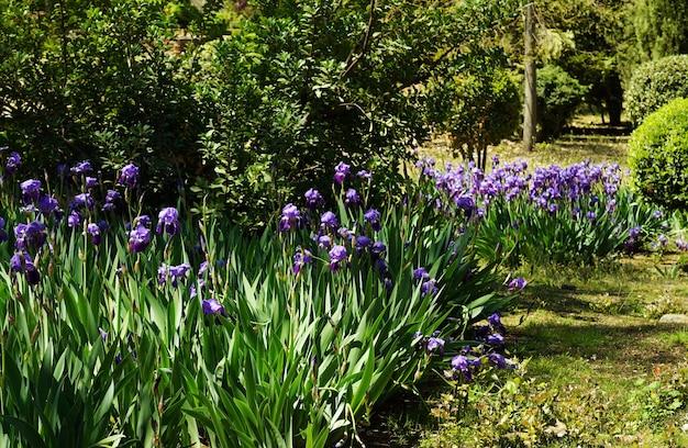 Selectieve focus shot van irissen in de tuin overdag Gratis Foto